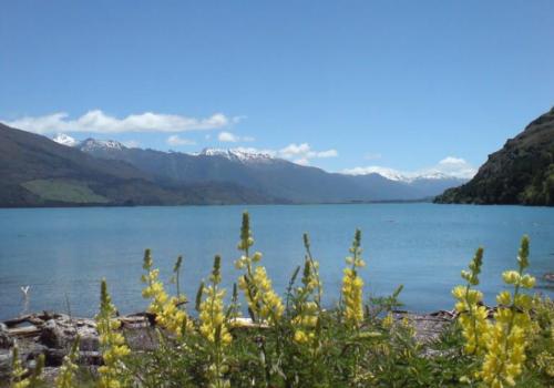 Lake Wanaka Hawea reis