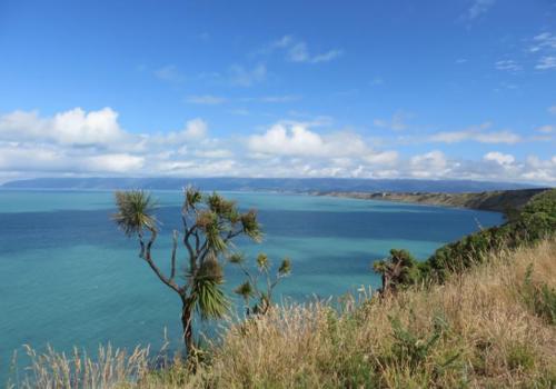 Palliser Bay Ngawi Surf
