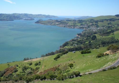 Otago, Peninsula, Dunedin, Portobello, Albatros