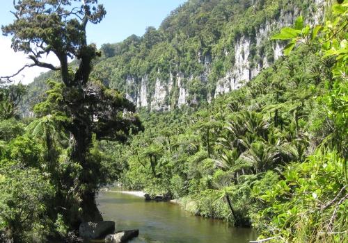 Paparoa, Park, Punakaiki, Pororari, River, Walk