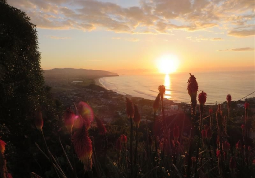 Dunedin, St Kilda, Beach, Otago, Pinguin