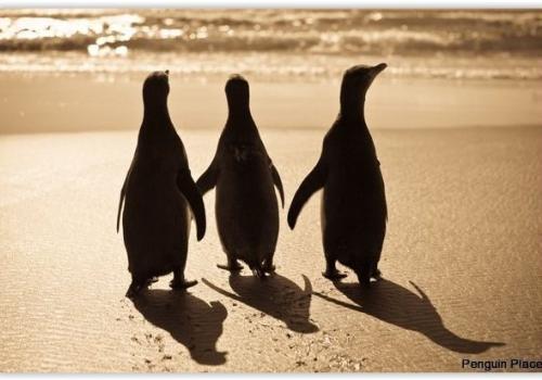 Penguin Place Dunedin